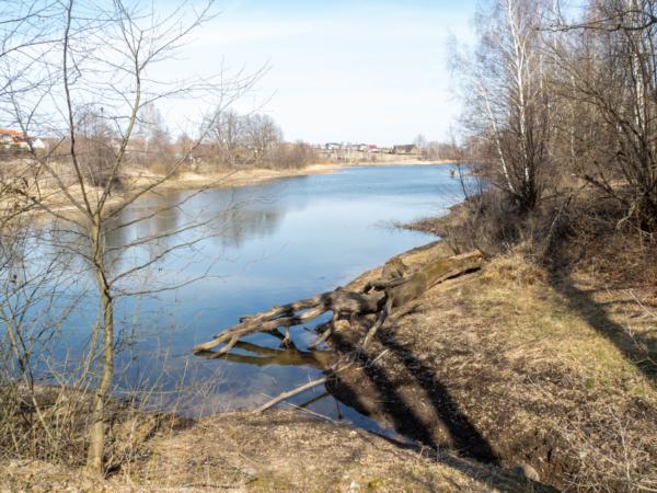Высохшее дерево в озере