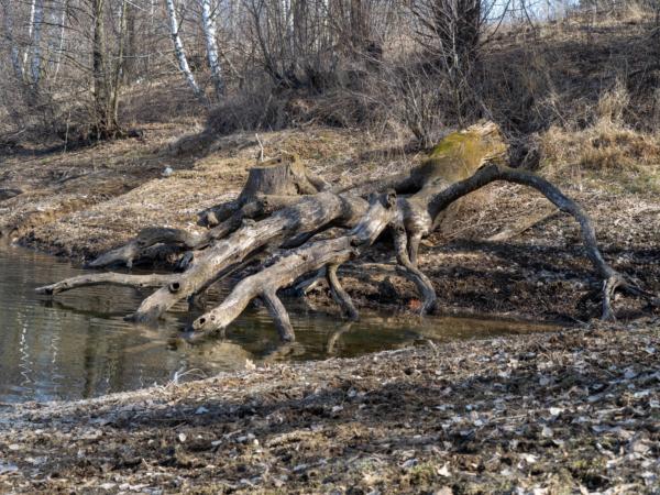Каряга в озере