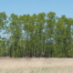 Деревянный пирс на берегу озера