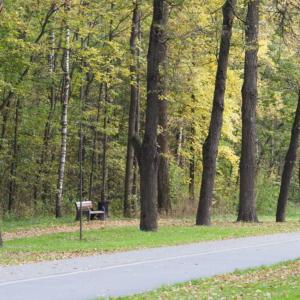 Осенние деревья в Измайловском парке